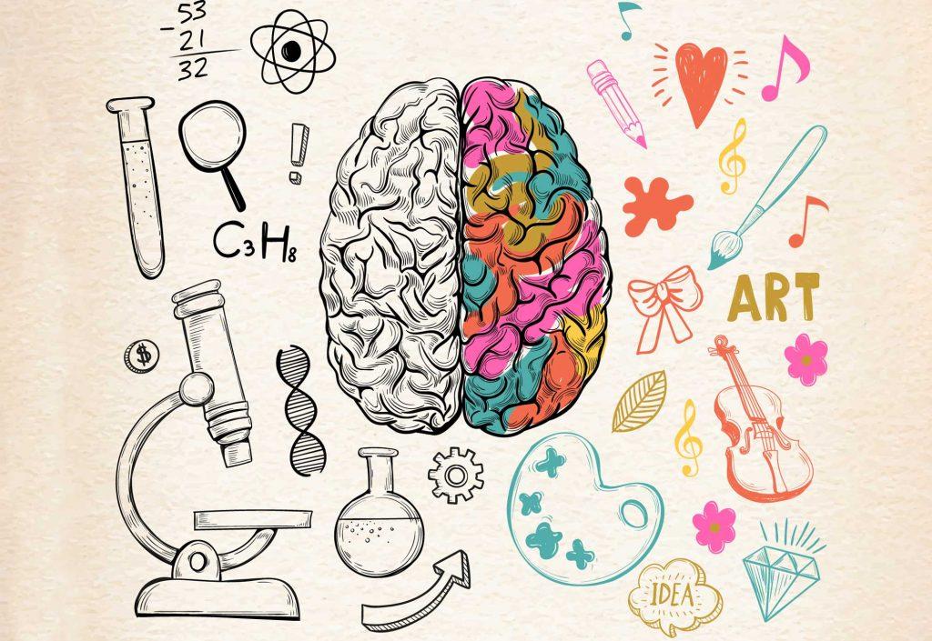 غلبه ی طرفی - نیمکره های مغز انسان - هر نیمکره مغز مربوط به چه فعالیتی است - درس و مدرسه - مومکا - darsomadrese.com